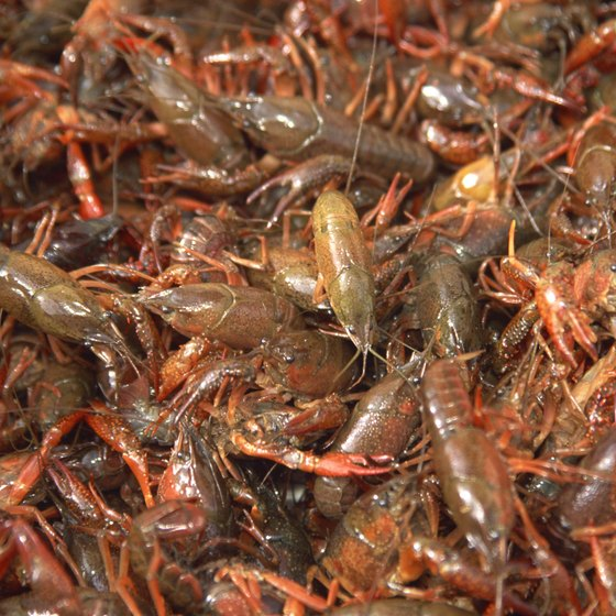 Crawfish is a Louisiana staple.