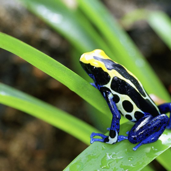 Costa Rica is rich in wildlife.