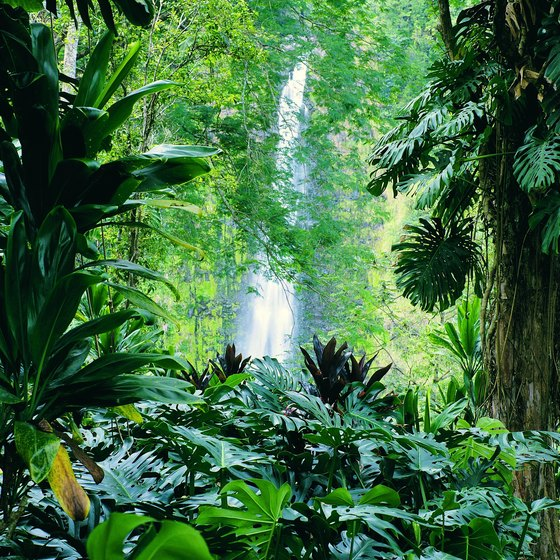 Instead of falling foliage, spend the autumn in Hawaii's lush green tropical parks.