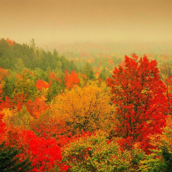 Guided tours of New England in autumn witness the fall foliage.