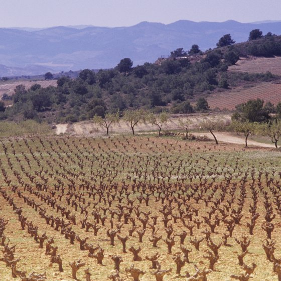 Rioja's long, dry growing season provides the perfect growing conditions for the Tempranillo wine grape.