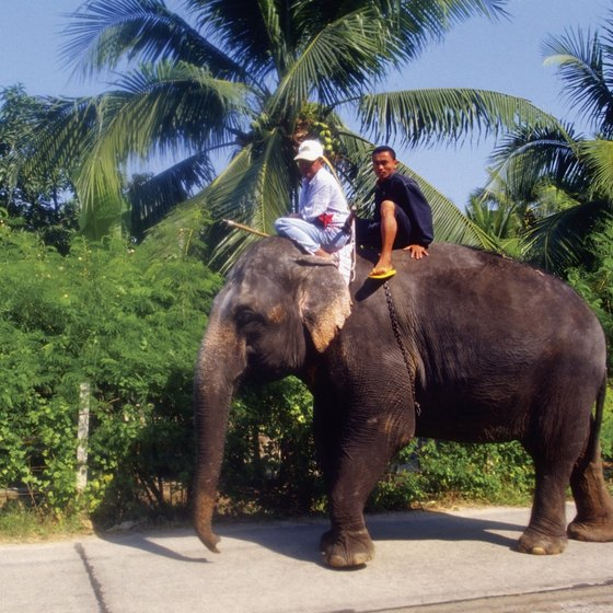 Riding an elephant is a popular tourist activity in Thailand.