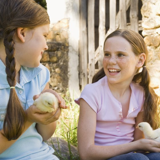 Petting zoos provide children with up-close experiences with traditional farm animals.