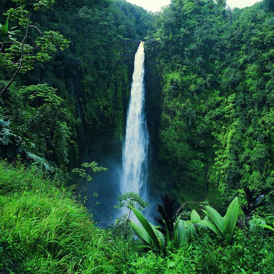 Akaka Falls is among the best known waterfalls on the Big Island of Hawaii.