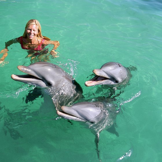 Swim with dolphins on Isla Mujeres.