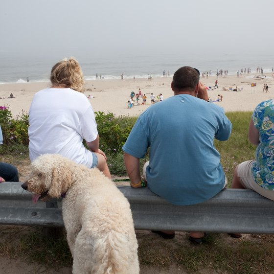 The Cape Cod National Seashore permits dogs all year.