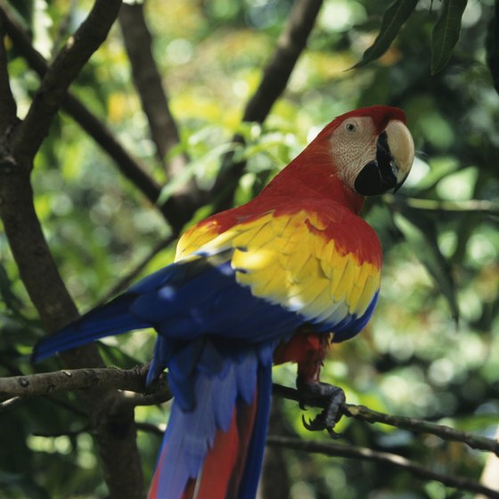 Children and their parents enjoy viewing the wildlife of Guanacaste, including scarlet macaws.