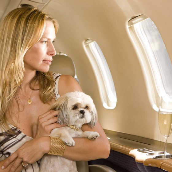 China and airlines have several requirements for pets traveling with owners.