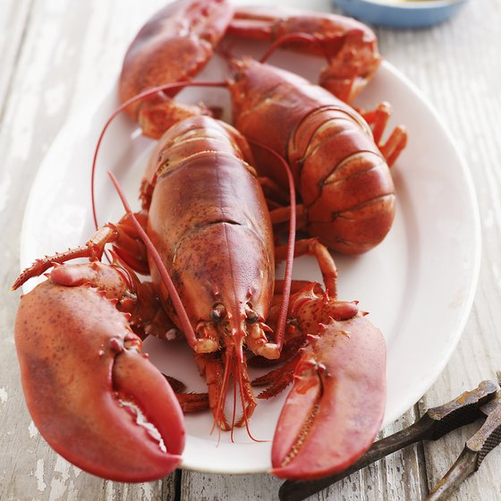Each year, more than 20,000 pounds of lobster are cooked at the Maine Lobster Festival.
