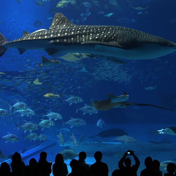 Ocean Expo Park is home to Okinawa Churaumi Aquarium, showcasing Okinawa's marine life.