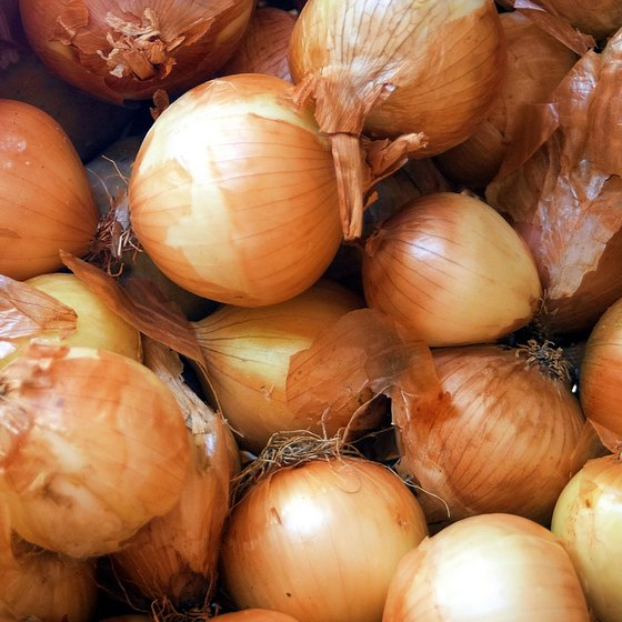 The Onion Festival was first celebrated in Elba in 1937.