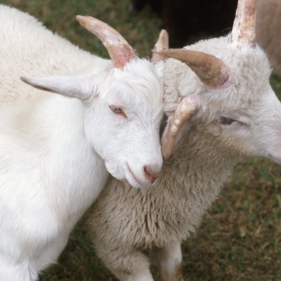 Petting Zoos in Chicago, Illinois | USA Today
