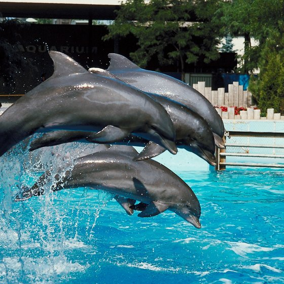 SeaWorld offers a dolphin encounter experience and dolphin shows.