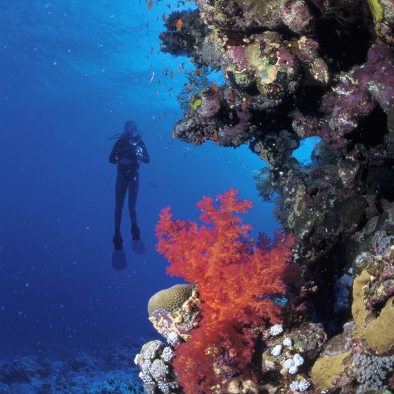 Grand Cayman's warm, clear waters makes it an ideal spot to scuba dive.