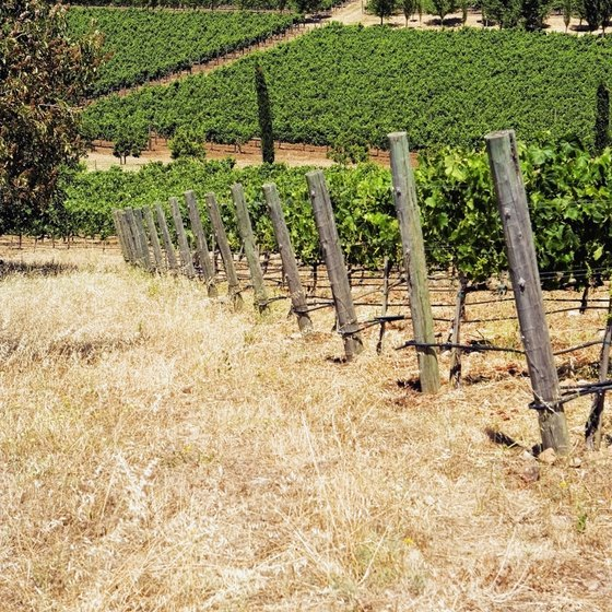 A vineyard in Napa, California.