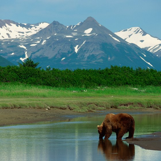 Spot a grizzly bear in the Canadian wilderness.