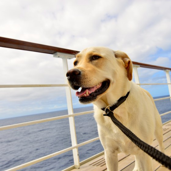 How to Take a Dog With You on a Cruise