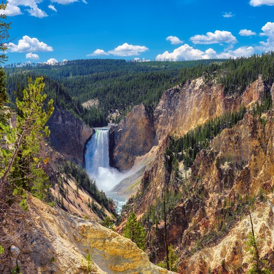 Visiting Yellowstone National Park in the Middle of August