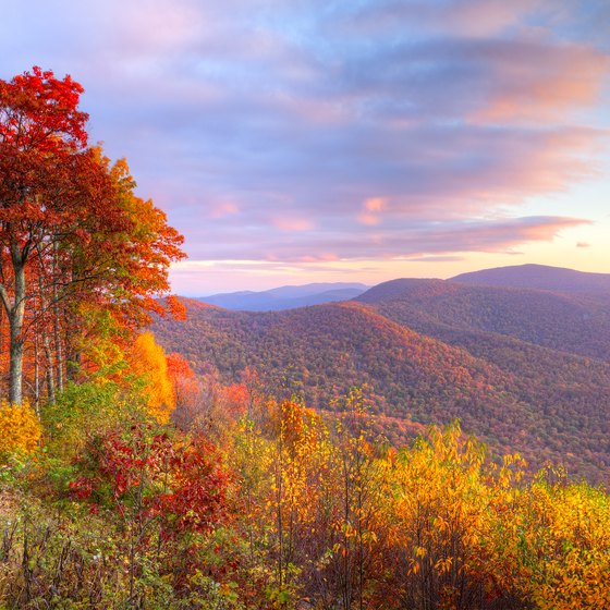 The Closest Shenandoah Hiking Trails to D.C.