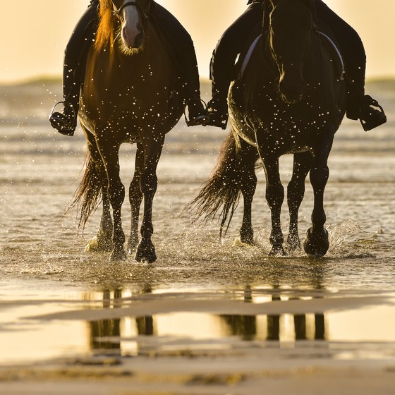 Horseback Riding in Myrtle Beach, South Carolina | USA Today