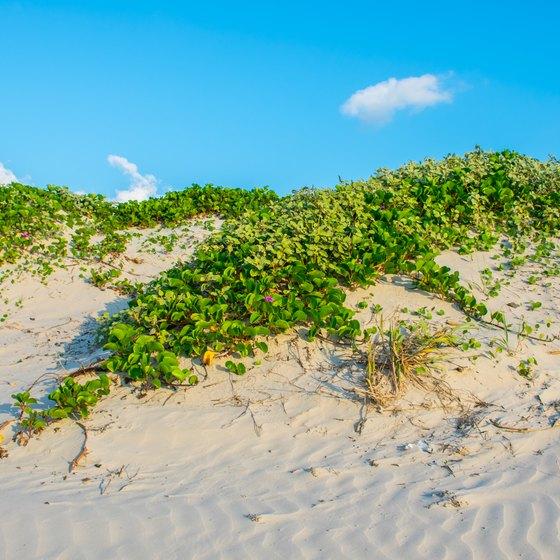 Padre Island Atv Rules