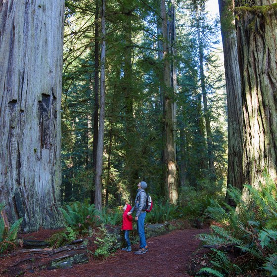 Climate of Redwood National Park