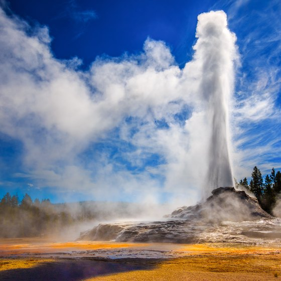 All-Inclusive Tours of Yellowstone Park in Montana