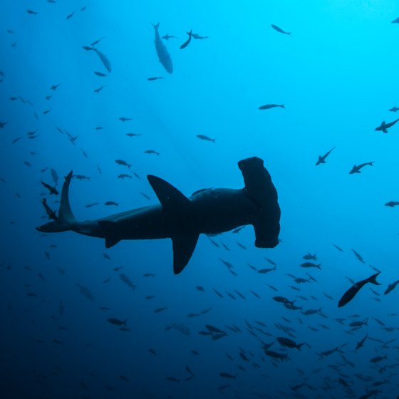 The Best Diving in Costa Rica