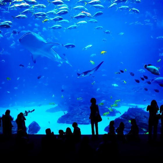 Top Five Aquariums in the U S  | USA Today