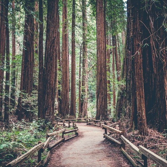 How to Plan a Trip to Redwood National Park