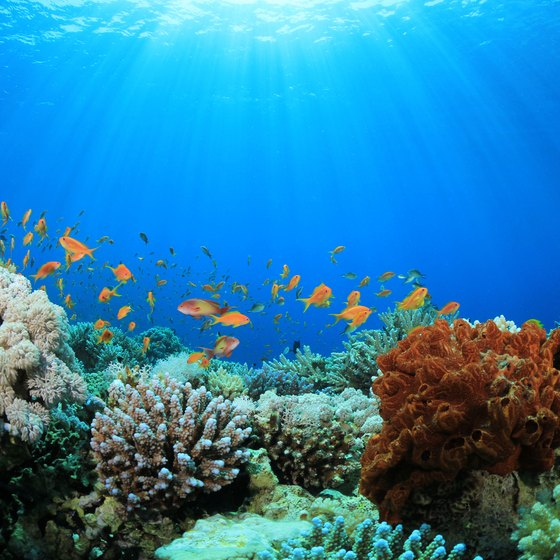 Coral Reefs of Brazil