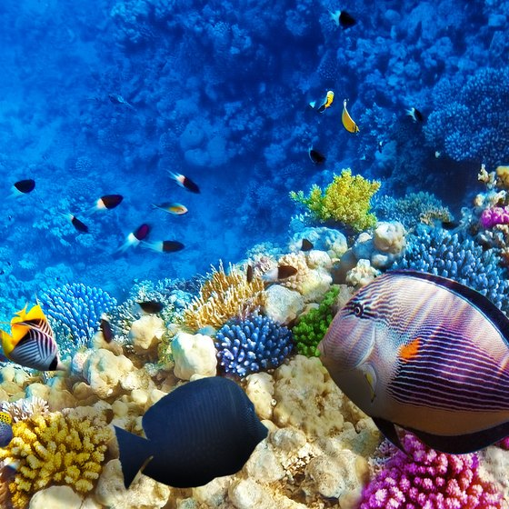 List of Philippine Coral Reefs