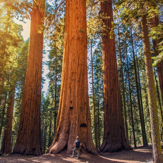 The Best Time to Visit the Sequoia Trees