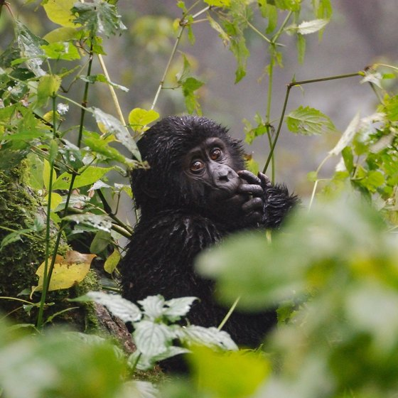 african rainforest animals and plants usa today