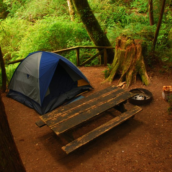Camping at Redwood National Park