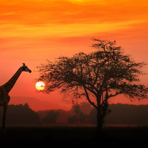 How to Travel to the Serengeti