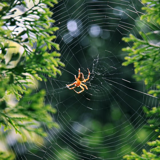 How to Keep Spiders From Campsites