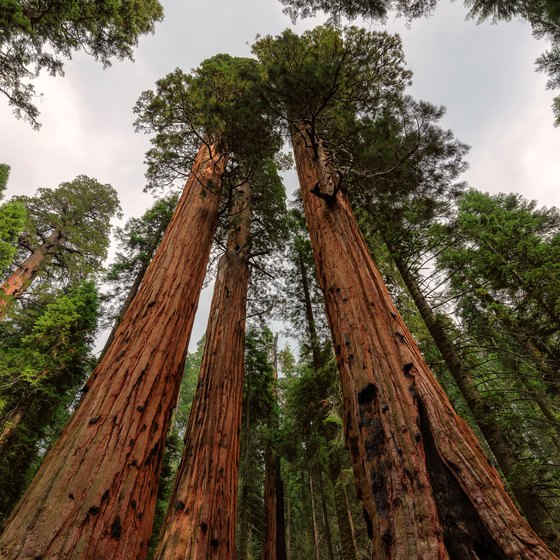 Facts About Sequoia National Forest