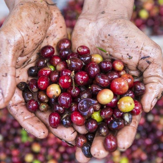 Honduras Traditional Foods | USA Today
