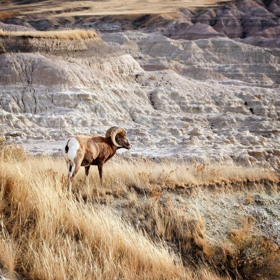 How Did Badlands National Park Get Its Name?