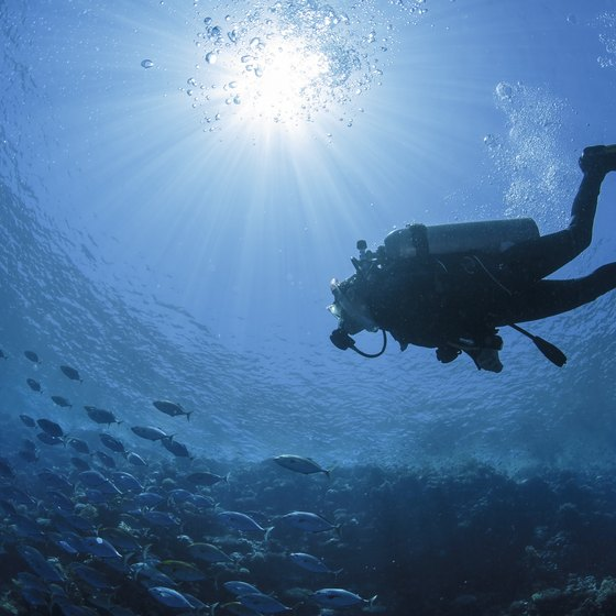 Scuba Diving Options in Sarasota, FL