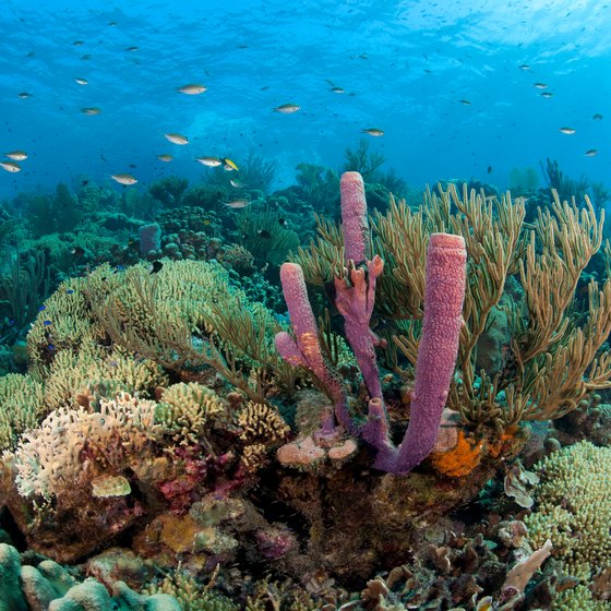 About Caribbean Coral Reefs