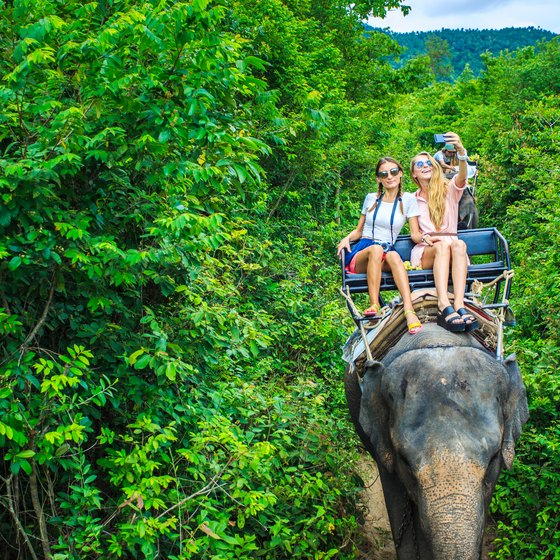 Elephant Riding Vacations