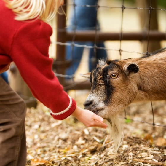 Petting Zoos in Oregon