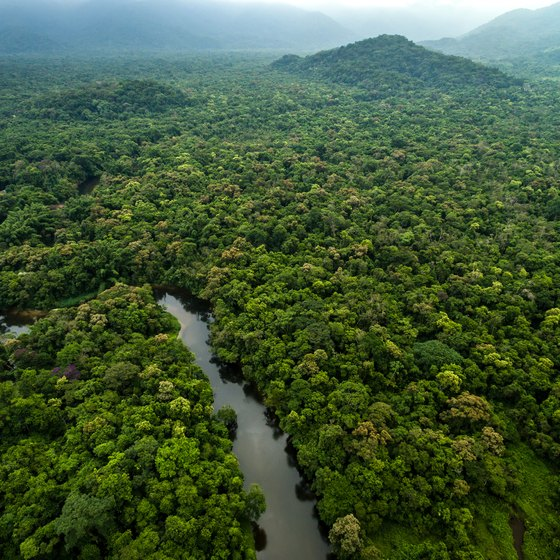 Introduction to the Amazon Rainforest