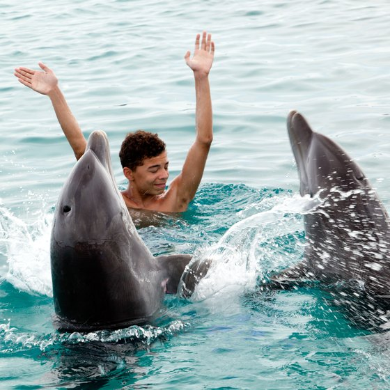 Swimming with Dolphins in Aruba | USA Today