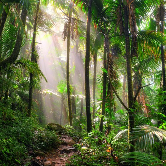 List of Plants in a Rainforest