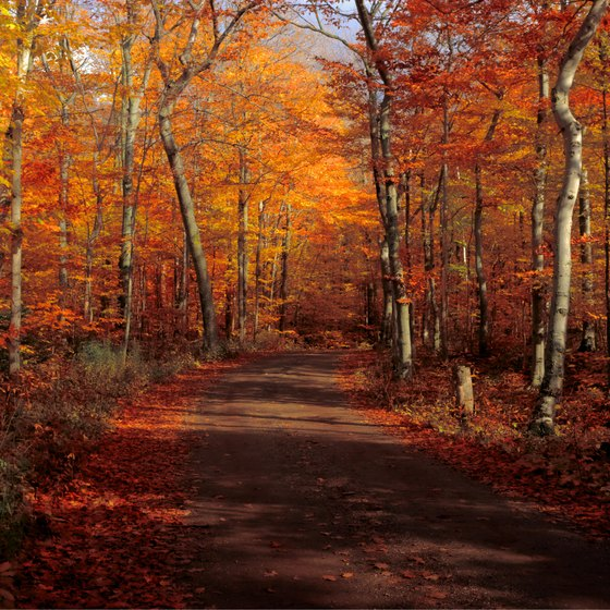 How To See Fall Colors In Door County Usa Today