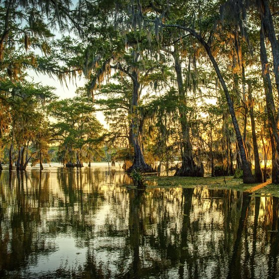 Facts About Louisiana Bayous