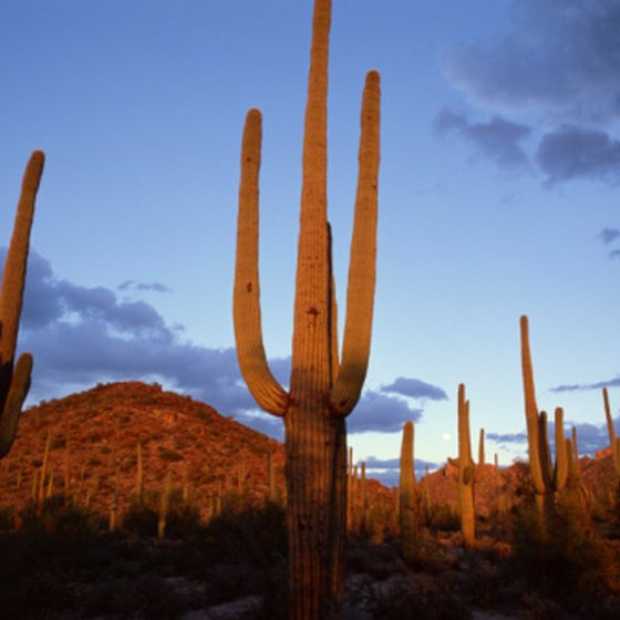 The Sonoran Desert is Arizona's most well-known example of hot, subtropical desert.